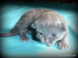 Jaylin femelle bleue
